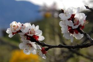primavera_strada_del_vino_sudtirolo_sud